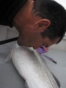 Releasing fish