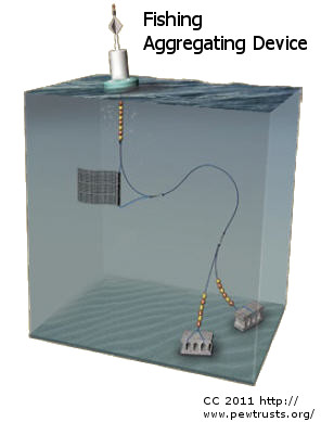 Fishing aggregating device the latest fishing fad for Fish aggregating device