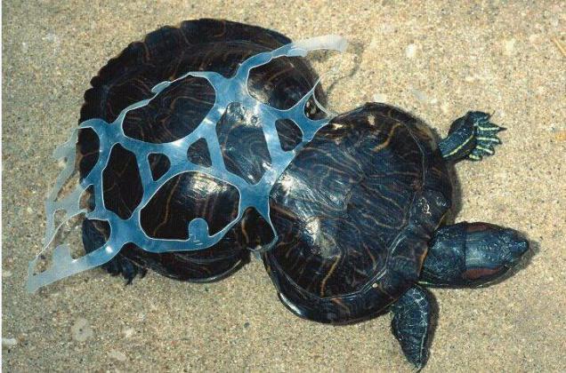 plastic kills turtles
