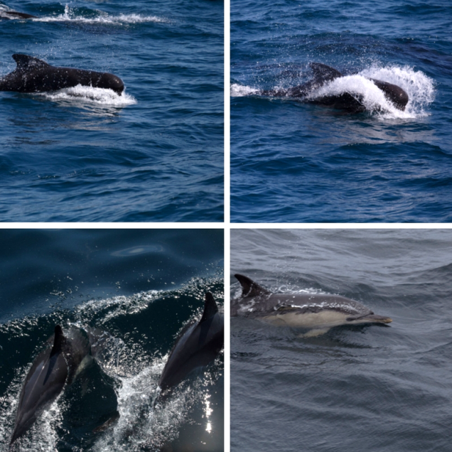 Les dauphins ont fait de notre expédition un voyage majestueux.